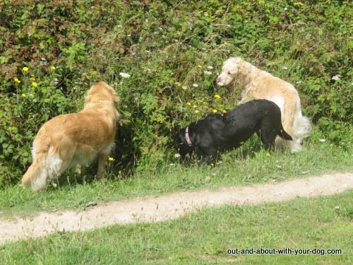 Sheepcote Valley Dog Walk